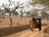 Carro de Camelo